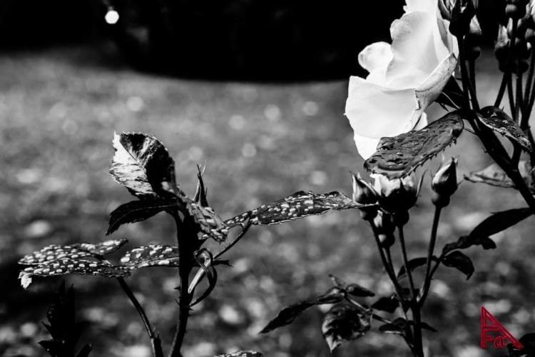 Alpha Photoghraphers - Alberto Cuman